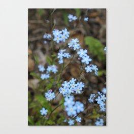 Copious Forget-Me-Nots Canvas Print