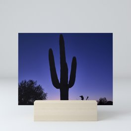 A saguaro cactus dominates the scene at dusk in the garden of the White Stallion Ranch a dude ranch Mini Art Print