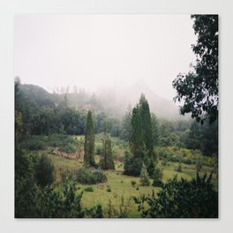(fog meadow) Canvas Print