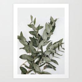 Eucalyptus Photography Art Print