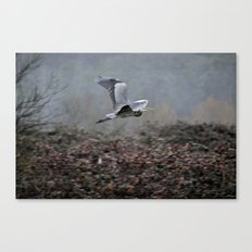 Blue Heron in the Rain  Canvas Print