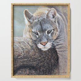 Just Chillin - Cougar Painting by Alan M Hunt Serving Tray