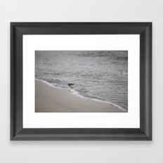Lonely Sandpiper Framed Art Print