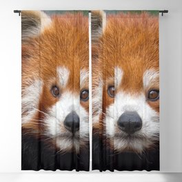 Awe Inspiring Bear Looking Ultra High Definition Blackout Curtain