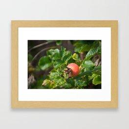 Rose Hip Framed Art Print