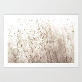 White pampas grass II Art Print