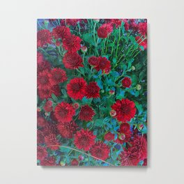 Red Mums Metal Print
