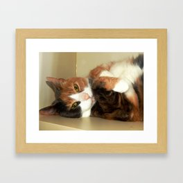 Want to take me home? Framed Art Print