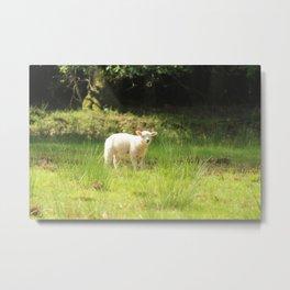 super cute white lamb Metal Print