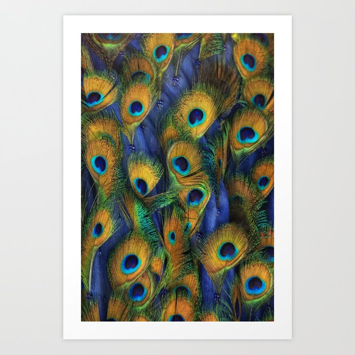 peacock eyes Art Print