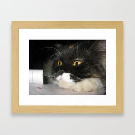Cat Study Framed Art Print