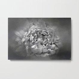 Blushing Friar Gray Peony - Floral Metal Print