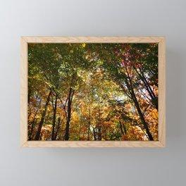 Through the Trees in October Framed Mini Art Print