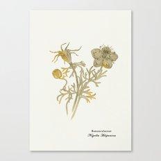 Nigella Hispanica, gold Canvas Print