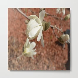 blossoming in spring Metal Print