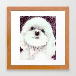 little white dog Framed Art Print