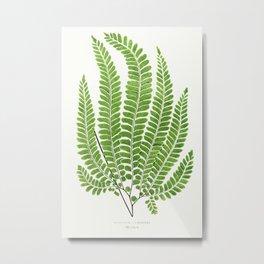 Edward Joseph Lowe - Adiantum Pubescens Metal Print