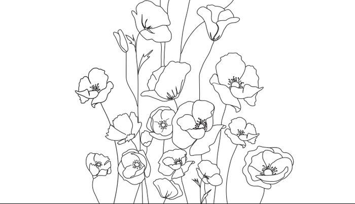 Poppy Flowers Line Art Pillow Sham