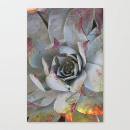 Tinged tips Canvas Print