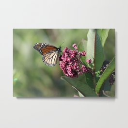 Queen of the meadow Metal Print
