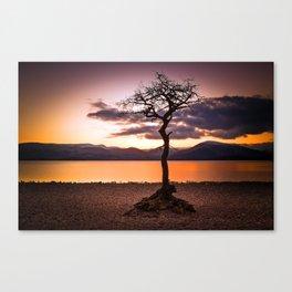 Milarrochy Bay Tree Canvas Print