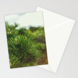 Pine Branch Stationery Cards
