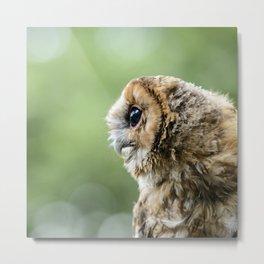 Brecon Owl Metal Print