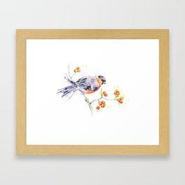 British Birds 2012 Series - Bullfinch Framed Art Print