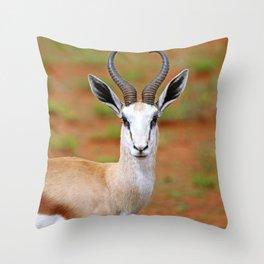 Springbok in Namibia, wildlife Throw Pillow