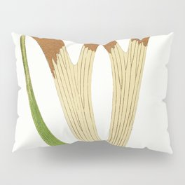 Edward Joseph Lowe - Platycerium Alcicorne Pillow Sham