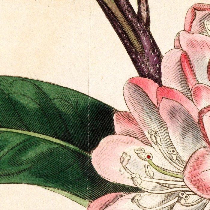 Rhododendron maximum 'Great laurel' Leggings
