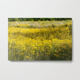 Field of Gold No.1 Metal Print