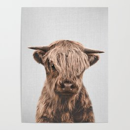 Highland Calf - Colorful Poster