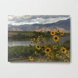 Lake Chelan Sunflowers Metal Print