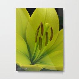 Hybrid Lily named Trebbiano Metal Print