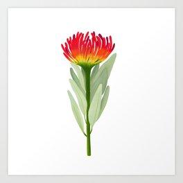 Flame Protea Flower Art Print