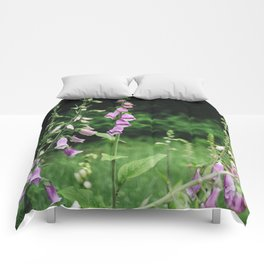 Wild foxgloves (Digitalis purpurea). Norfolk, UK. Comforters