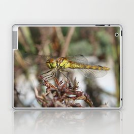 Brown Dragonfly On Husks With Garden Background Laptop & iPad Skin
