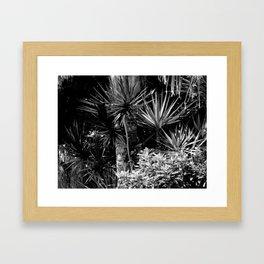 Palms B&W Framed Art Print
