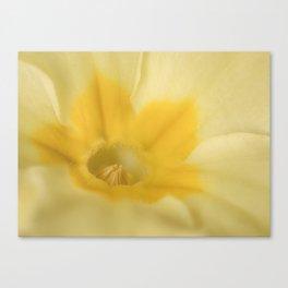 Spring Primrose Canvas Print