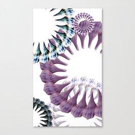 see shells Canvas Print
