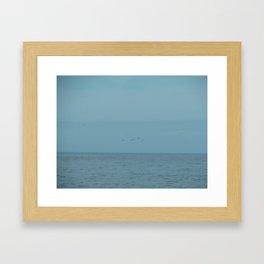 Seagulls flying in the blue Framed Art Print