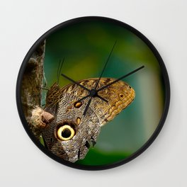 Butterfly eye of owl (Caligo eurilochus) Wall Clock