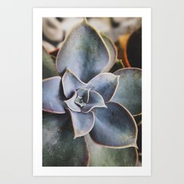 beautiful succulent Art Print