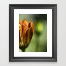 . . . Framed Art Print