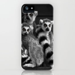 Gang Of Ring-Tailed Lemurs iPhone Case