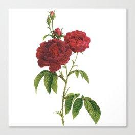 Vintage Red Rose [02] Canvas Print