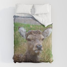 The young Highland Deer - Loch Arkaig, Highlands of Scotland - 2019 Comforters