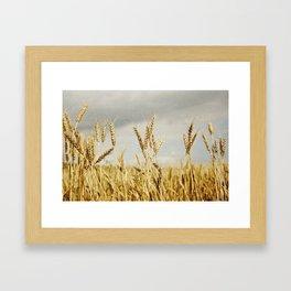 Wheat field Framed Art Print