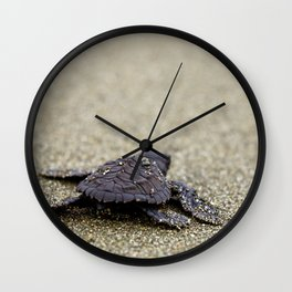 Olive Ridley Hatchling Wall Clock